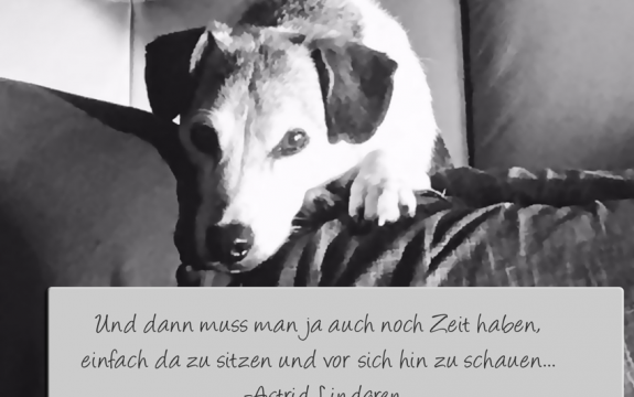Freischnauze Hundetraining